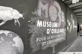 Fresques panoramiques pour le musée de la biodiversité et l'environnement d'Orléans (02)